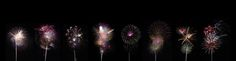 https://flic.kr/p/WshXci | Firework Flowers | I have always loved photographing fireworks and trying various methods to get something different. I went into last night with a plan. Use a 70mm lens, capture the trail going up along with the explosion to make them look like flowers. I had done before, not like this. Using on Bulb mode allowed me to vary the exposure depending on the amount of fireworks. Giving different colors and looks. Final step was to stack into one image with some…