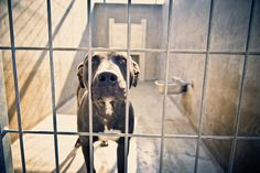 """Susan Sabo Photography, """"Shelter Dog Series""""      She donates 10% of her sales to animal help organizations."""