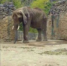 Ruperta is a sick and starving African elephant being held at an extremely impoverished zoo. Photos show Ruperta's poor health and it is feared she may not live much longer under these conditions. Demand that Ruperta be released to a proper accredited sanctuary before it is too late.