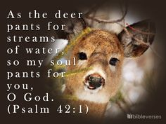 Psalm 42:1 - Love the song to this!