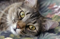Cat disabled to walk again  Gatto disabile torna a camminare