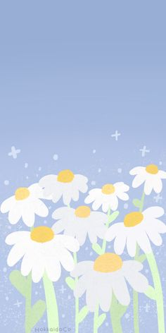 Cute White Daisy Wallpaper | HokkaidoCo