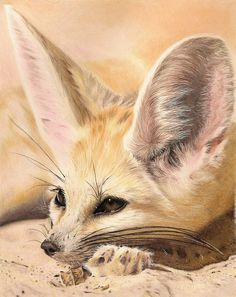 Fennec Fox by AnnemiekedW on deviantART Animal Paintings, Animal Drawings, Cute Drawings, Happy Animals, Animals And Pets, Cute Animals, Fox Illustration, Illustrations, Fuchs Tattoo