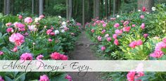 About Peony's Envy