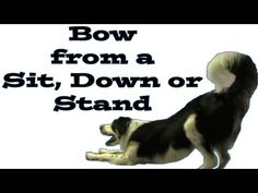 #dogs #tricks #training bow from a down, sit, and stand...  www.pamsdogtraining.com #ebooks