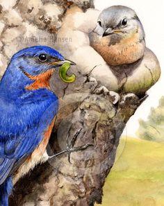 Bluebird Watercolor Art Print by CorvusArtStudio on Etsy, $12.00
