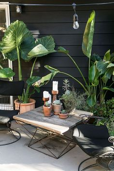 black and white back patio with greenery / sfgirlbybay