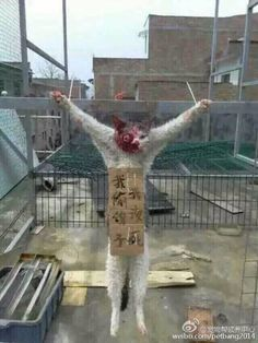 53 Best China images in 2018 | Stop animal cruelty, Animal