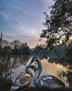 Meravigliosi Cigni, Interni e Altro Ancora ✶ 𝒟𝒶𝒾𝓁𝓎 𝐼𝓃𝓈𝓅𝒾𝓇𝒶𝓉𝒾𝑜𝓃 {Things That Inspire Me Everyday} Valentines Weekend, Love Rules, Mute Swan, Site Design, Lonely Planet, Daily Inspiration, Inspire Me, Did You Know, Serenity