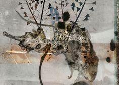 Hybrid Moth, Insects, Animals, Animales, Animaux, Animal, Animais