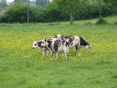 Stabiliser la consommation mondiale de protéines d'origine animale est indispensable
