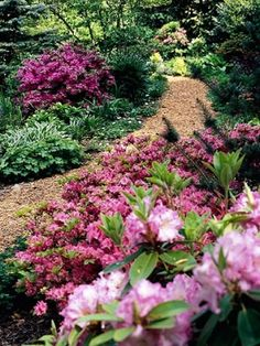 Use Flowering Shrubs        We typically think of perennials such as hostas for shade gardens -- but don't forget about the wide selection of flowering shrubs to pack your shady spots with color, texture, and height. Here, a variety of azaleas and rhododendrons provide a big spring punch, and their evergreen foliage keeps the garden looking good in winter.        Discover more shade-loving shrubs in Plant Encyclopedia. by doreen.m