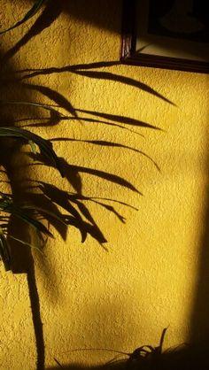 Shadow. Silvia Daniela Godinez Diaz