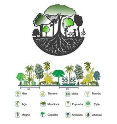 Uma técnica nova de recuperar terras degradadas e transformar em incríveis florestas produtivas. Esse é o trabalho de Ernst Götsh, chamado de Agricultura Sintrópica.