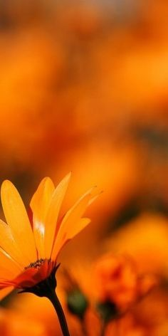 Luscious glowing orange...