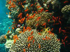 A variety of marine life-forms, Port Ghalib Egypt