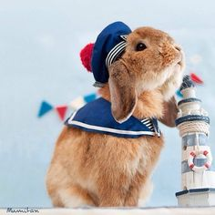 PiuPiu the World's Most Stylish Bunny Is Setting New Fashion Trends - BlazePress Cute Little Animals, Cute Funny Animals, Cute Cats, Funny Rabbit, Pet Rabbit, Cute Bunny Pictures, Cute Baby Bunnies, Rabbit Cages, Fluffy Animals
