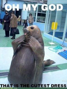 Cute Seal Memes (12 Pics)