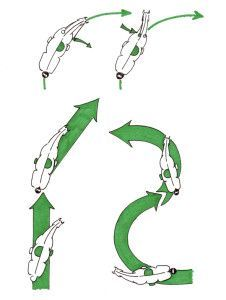 Abbildung 4: von links nach rechts: oben: rechts öffnender Zügel, links anliegender Zügel. Unten: 1. Traversale, 2. Renvers, 3. Schulterherein, 4. Travers. Der Reiter sitzt in Bewegungsrichtung.