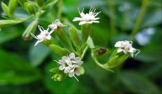 ΣΤΕΒΙΑ Το βότανο που σταματά την επιθυμία για κάπνισμα Stevia, Safari, Health, Plants, Image, Health Care, Plant, Salud, Planting