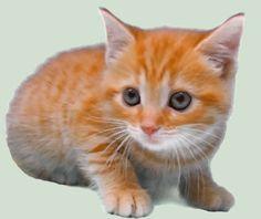 Little Cat V by luisbc