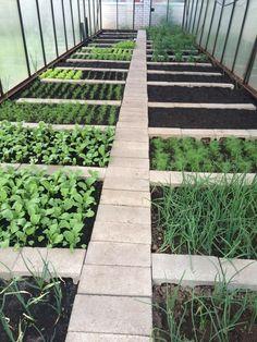 The paving can be a paved path. Vegetable Garden Planning, Backyard Vegetable Gardens, Veg Garden, Vegetable Garden Design, Greenhouse Gardening, Small Backyard Landscaping, Diy Garden Bed, Garden Yard Ideas, Garden Fences