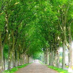 Oud Beijerlandse dijk in Oud Beijerland