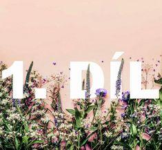 Atlas bylin: Bylinky stres a úzkost odplaví a spánek se dostaví - iDNES. Herbalism, Plants, Gardening, Herbal Medicine, Garten, Planters, Lawn And Garden, Garden, Plant