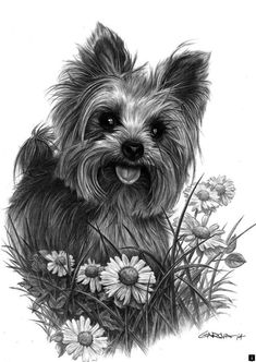 Pen drawing of a yorkie. Pen drawing of a yorkie. I Love Dogs, Cute Dogs, Tatoo Dog, Silky Terrier, Photo Chat, Yorkie Puppy, Poodle Puppies, Yorkshire Terrier Puppies, Dog Portraits