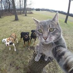 Is that true she's taking selfie with rottweiler and other dogs...