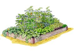 High Yield  Maximize your vegetable harvest with these high-performing crops. You can expect to get more than 50lbs of garden-fresh produce from this 18 sq. ft. garden.    Gardeners-Site