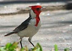 Resultado de imagen para aves de la argentina Rhodesian Ridgeback, Exotic Birds, Flora, Chile, Nature, God, Rock, World, Beautiful Pictures