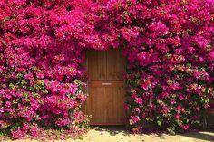 Jardín Puerta, Desconocido