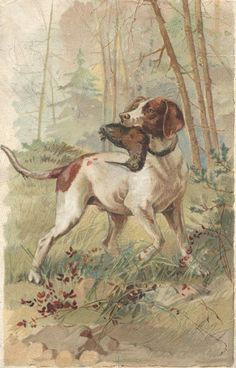 Hunting Dog picture at least in a small picture frame on a desk!