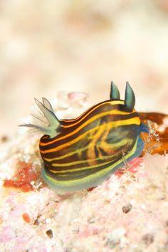 沖縄・宮古島ダイビングサービス Fish a go go !|あそびゅー!スキューバダイビング