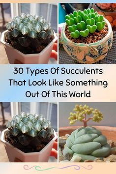 Types Of Succulents Plants, Cactus Types, Succulents In Containers, Cacti And Succulents, Planting Succulents, Container Flowers, Container Plants, Potted Plants, Different Types Of Succulents