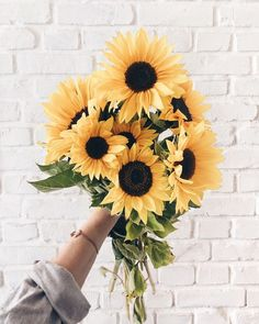 A sunny and autumnal weekend 🌻☀ They are still looking like on the day I picked them ✨ I'm spending lovely days in my little hometown and… Flowers Nature, My Flower, Wild Flowers, Beautiful Flowers, Unicornios Wallpaper, Sunflower Wallpaper, Flower Aesthetic, Photo Wall Collage, Tulips