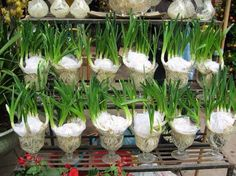 Gardens Discover Discover thousands of images about Cool agriculture New Holland Planting Seeds Quotes Container Gardening Gardening Tips Vertikal Garden Vertical Garden Design Organic Fruits And Vegetables Lawn Edging Bottle Garden New Holland, Easy Garden, Indoor Garden, Planting Seeds Quotes, Container Gardening, Gardening Tips, Vertikal Garden, Vertical Garden Design, Organic Fruits And Vegetables