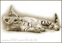 What a nice drawing of an Ocicat Kitty.