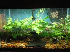 Afbeeldingsresultaat voor small tank  terrarium