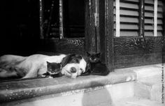 http://thehydrant.files.wordpress.com/2013/09/two-kittens-and-a-sleepy-dog-photo-by-fox-photosgetty-images-may-1929.jpeg