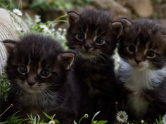 three little guys