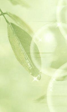 l sagacious green l  ᘡℓvᘠ❉ღϠ₡ღ✻↞❁✦彡●⊱❊⊰✦❁ ڿڰۣ❁ ℓα-ℓα-ℓα вσηηє νιє ♡༺✿༻♡·✳︎· ❀‿ ❀ ·✳︎· FR Sep 30, 2016 ✨ gυяυ ✤ॐ ✧⚜✧ ❦♥⭐♢∘❃♦♡❊ нανє α ηι¢є ∂αу ❊ღ༺✿༻✨♥♫ ~*~ ♪ ♥✫❁✦⊱❊⊰●彡✦❁↠ ஜℓvஜ