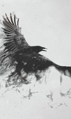 Raven Study No. 1 and 2 by Lauren Gray - Google Search