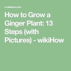 How to Grow a Ginger Plant: 13 Steps (with Pictures) - wikiHow