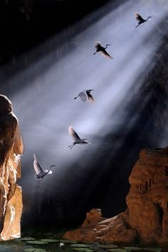 Birds in a ray of light...