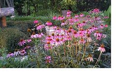 """Gardening in Central Texas - great site for when to plant what in this tricky """"just wait a minute"""" Texas weather"""