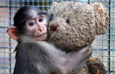 Pour une interdiction définitive de l'expérimentation animale