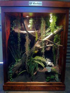Frog Habitat, Reptile Habitat, Reptile Room, Reptile Cage, Reptile Enclosure, Bearded Dragon Enclosure, Bearded Dragon Cage, Rabbit Cages, Les Reptiles
