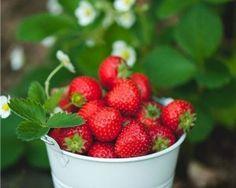Los mejores alimentos de primavera